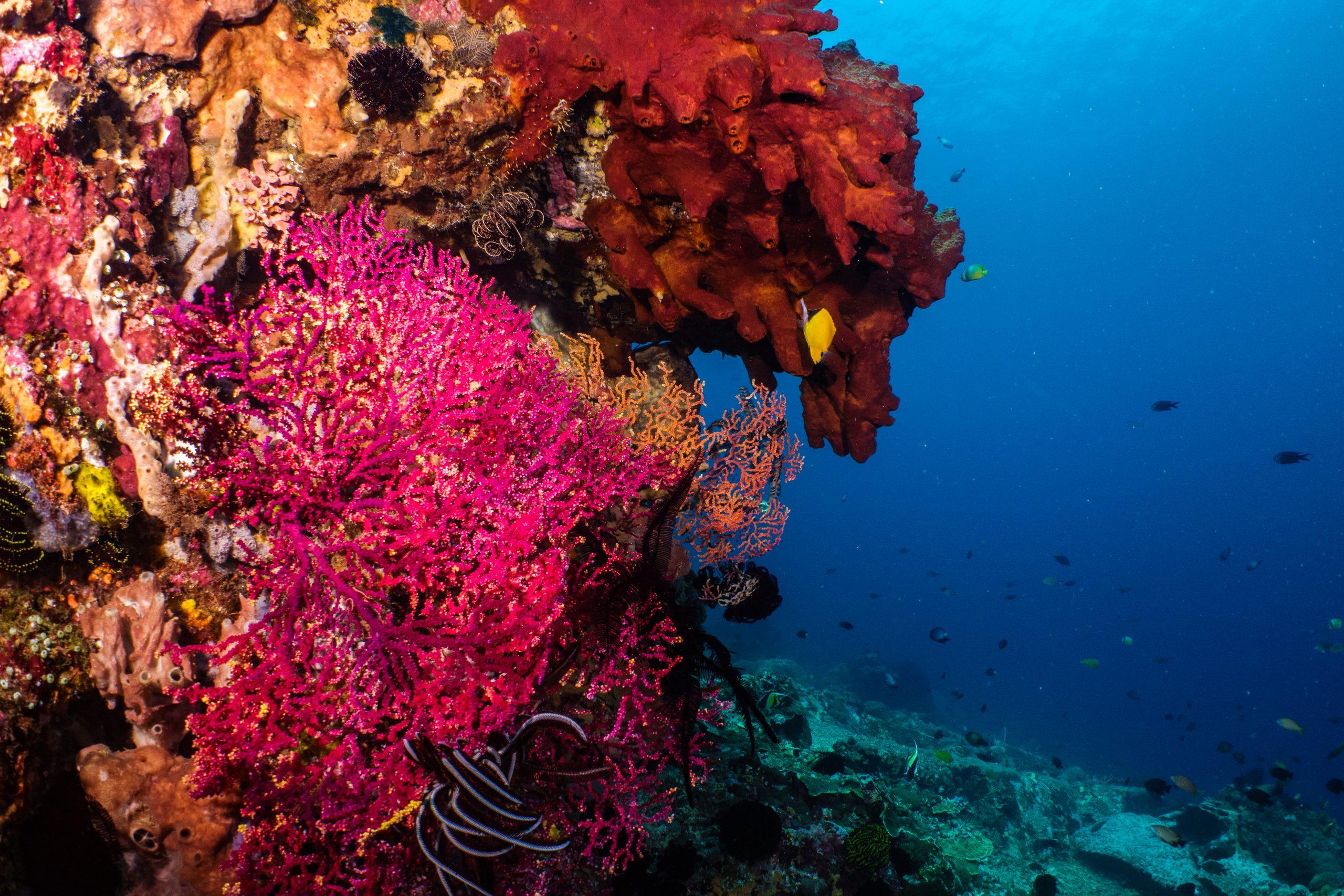 Plonger à Cabilao island à Bohol