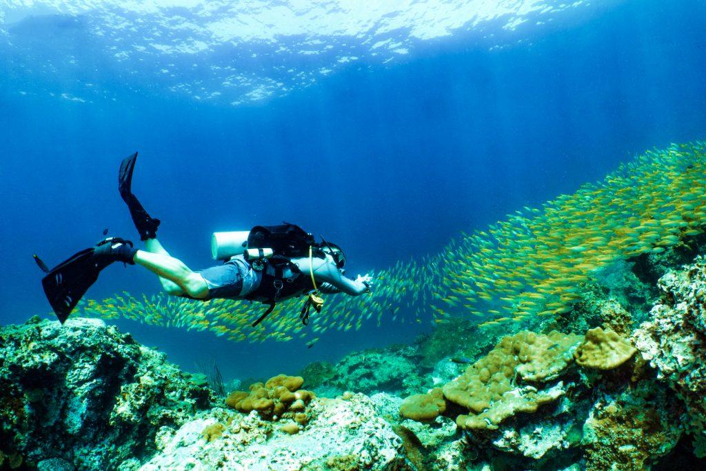 Sortie plongée Bohol