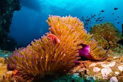 Plonger à Bohol