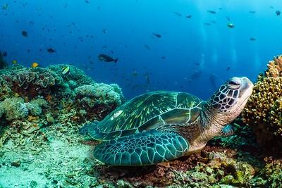Palmes, masque, tuba, avec des tortues