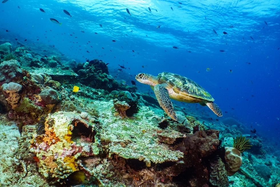 Plongez à Bohol aux Philippines avec French Touch Diving