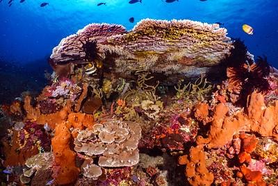 Sortie snorkeling dans les coraux de Bohol