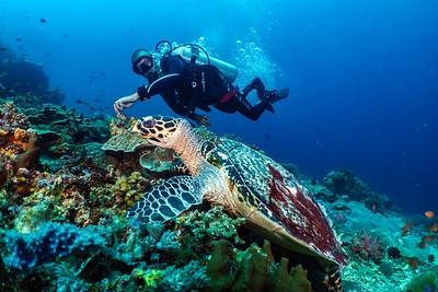 Cours de plongée Philippines