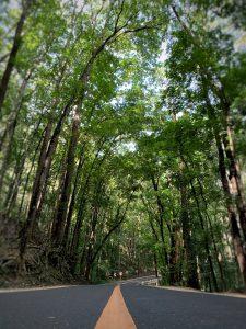 manmadeforest2